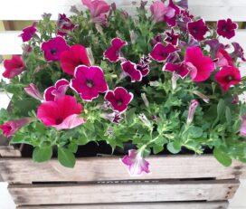 Mrs Popple's Garden