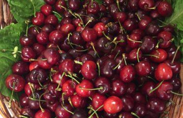 Frutteria Benassi